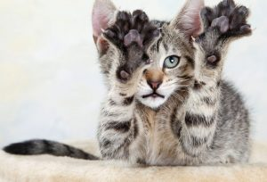 cat declawing - should I have it done?